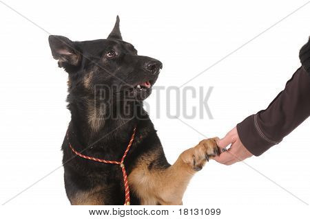 Dog Paw And Human Hand Shaking,
