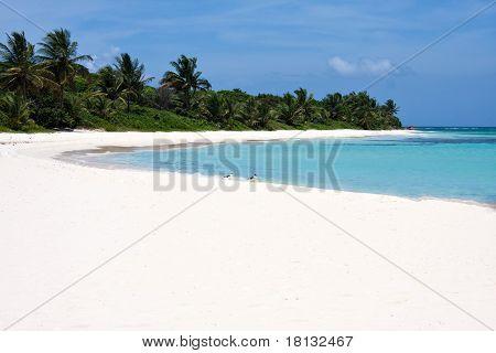 Ilha de Culebra flamenco Beach porto-riquenho