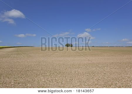 Chalky Pea Field