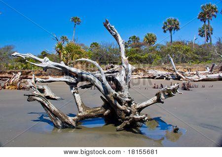 Tree at the Boneyard