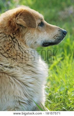 dog profile
