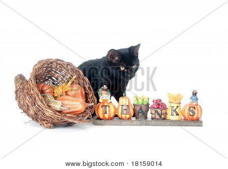 Cat and cornucopia