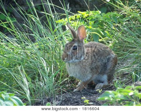 Bunny In The Weeds