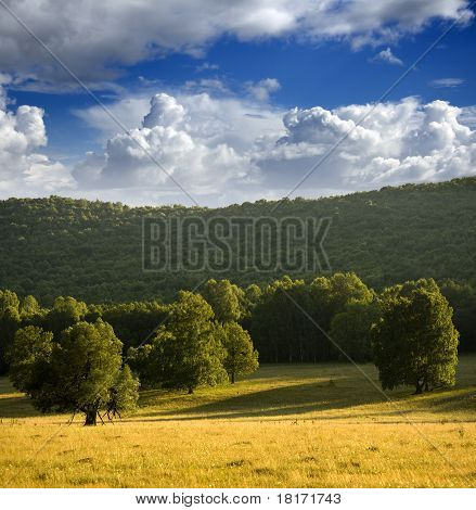 Meadow With The Dry Grass And Green Trees
