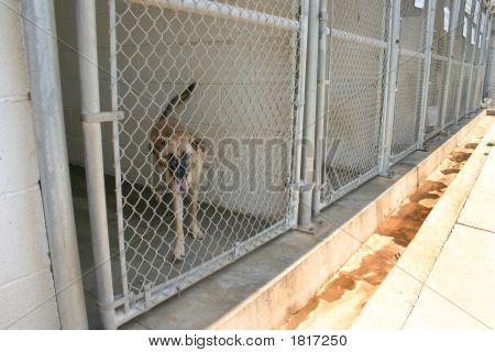 Caged Hund