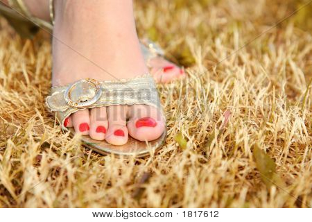 Female Foot On The Grass