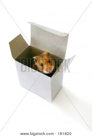Eng in der Kiste