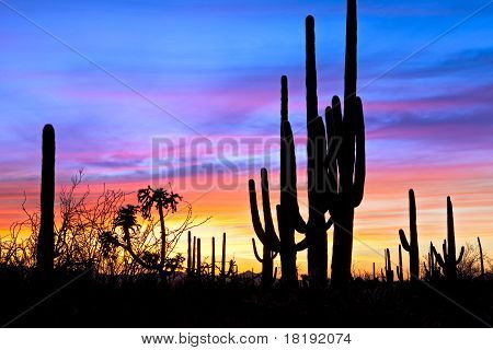 Sunset In Desert.
