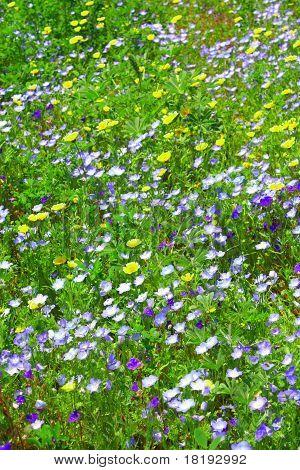 Prarie Wildflowers