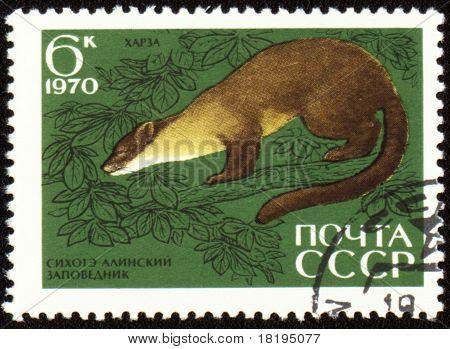 Pine Marten On Post Stamp
