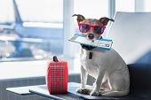 Dog In Airport Terminal On Vacation poster