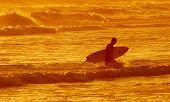 pic of beach sunset  - A surfer returning home on a Californian beach at sunset - JPG