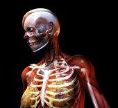 Skin And Bone 2
