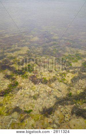 Detail Of Underwater Landscape