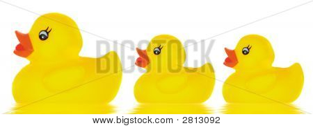 Family Duck Toy