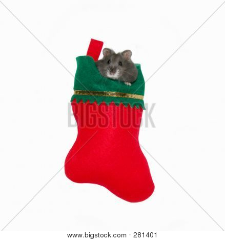 Christmas Stocking Critter