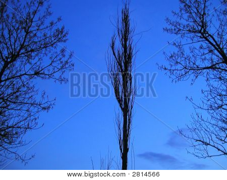Árvore de noite de Inverno