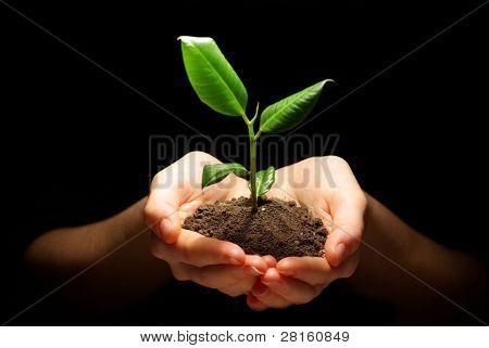 Manos sosteniendo la planta en el suelo en negro