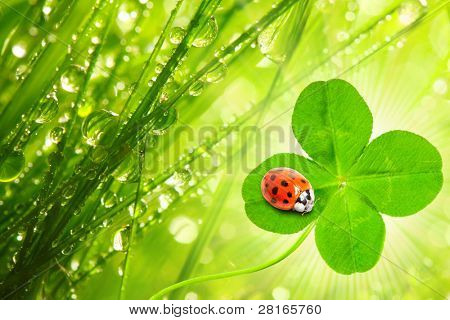 Funny picture of four leaf clover and ladybug. Great for greeting card.
