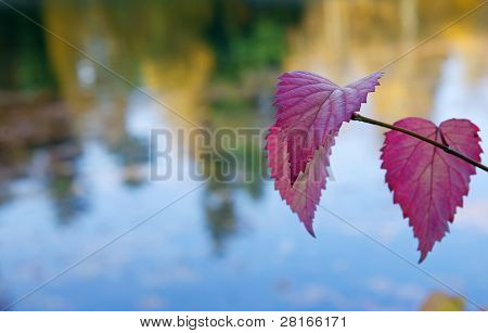 Violet and purple leaves against a soft focus lake reflection trees
