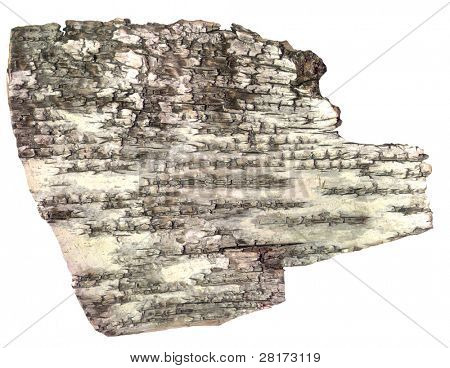 HQ Pies of bark of birch  isolated on white