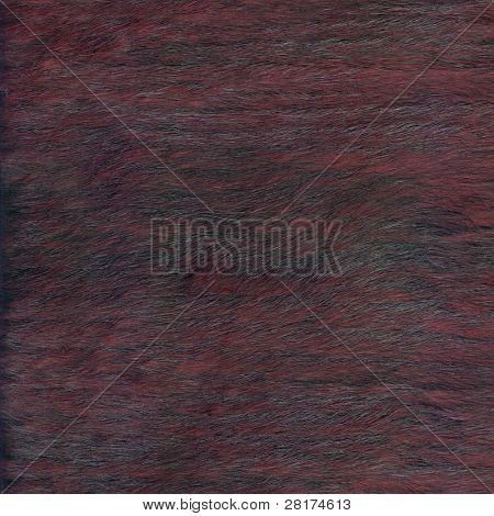 Cerca de la textura de la piel a fondo