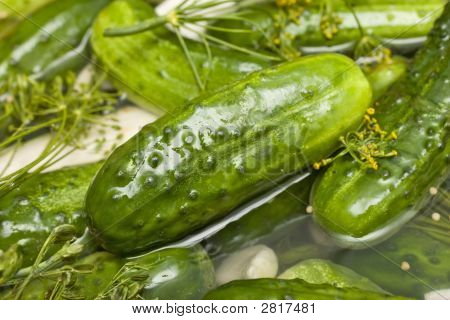 Homemade Fresh Dill Pickle