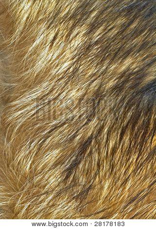 Cerca de textura de piel de lobo a fondo