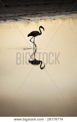 Flamingo At Sunset On A Lake