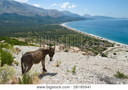 panorama of Qeparo beach and donkey in southern Albania