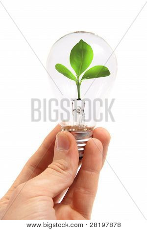 Eco Concept: Lightbulb With Green Plant Inside