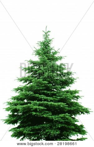 The Bare Christmas Tree
