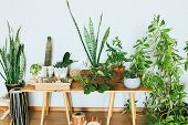 Plants In Pots. Indoor Plants In A Modern Cozy Interior. poster