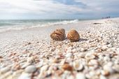 Seashells shelling activity on shell beach in Sanibel, Fort Myers , Southwest Florida coast, USA tra poster