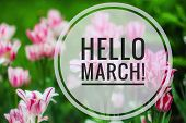 Banner Hello March. Greetings Of Spring. We Are Waiting For Spring. Hello March poster