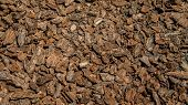 Crushed Tree Bark Texture Background Closeup. Shredded Brown Tree Bark For Decoration And Mulching O poster