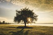Alone Tree Silhouette On Riverside Lake With Sunset Or Sunrise On Green Meadow In Countryside Landsc poster