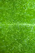 stock photo of stomata  - Green leaf at 100 magnification under biological microscope - JPG