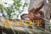 The Text Wild Life On The Broken Glass. The Background Is Slightly Blurred. Wildlife Conservation Co poster
