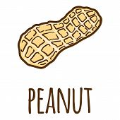 Peanut In Shell Icon. Hand Drawn Illustration Of Peanut In Shell Vector Icon For Web Design poster