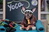 Pet  Yoga. Dog Fitness. Fitness And Healthy Lifestyle For Pet.  Dog Trainer Portrait In Studio Surro poster