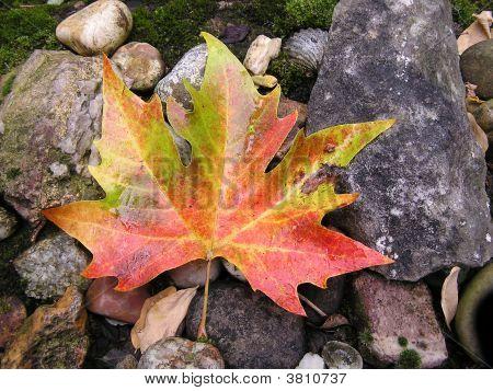 Autumn Leaf Falls On The Rocks