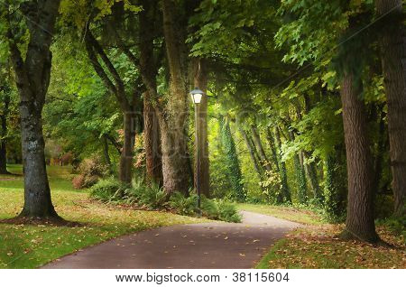 Magical Woodland Path