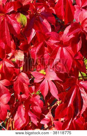 Autumnal Ornament, Red Leaves