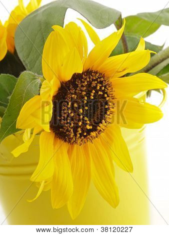 Sunflower In Yellow Bucket