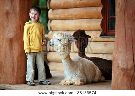 Cute little boy playing with a baby alpaca