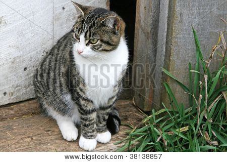 Striped cat in doorway