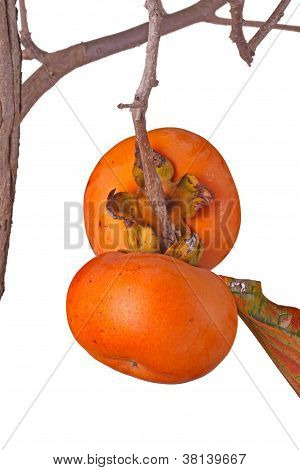 Two Ripe Persimmons Isolated Against White