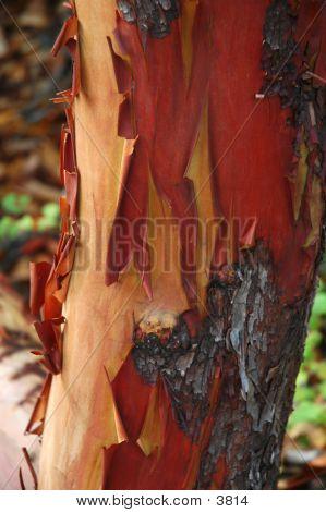 Arbutus Peel
