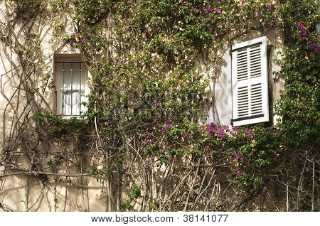 Windows And Wall With Ivy